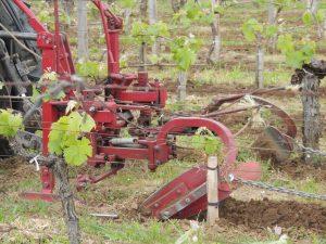 Vigne Vignobles Carles_13