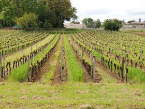 Vigne Vignobles Carles_7